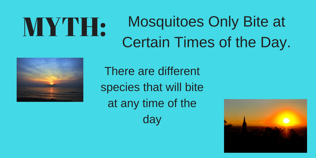 Mosquito Myth Related to Time of Day